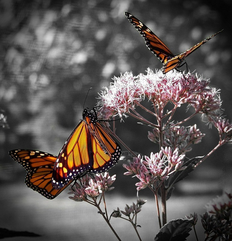 the-mountain-of-butterflies-7 6 Interesting Facts about the Mountain of Butterflies