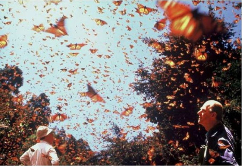 the-mountain-of-butterflies-8 6 Interesting Facts about the Mountain of Butterflies