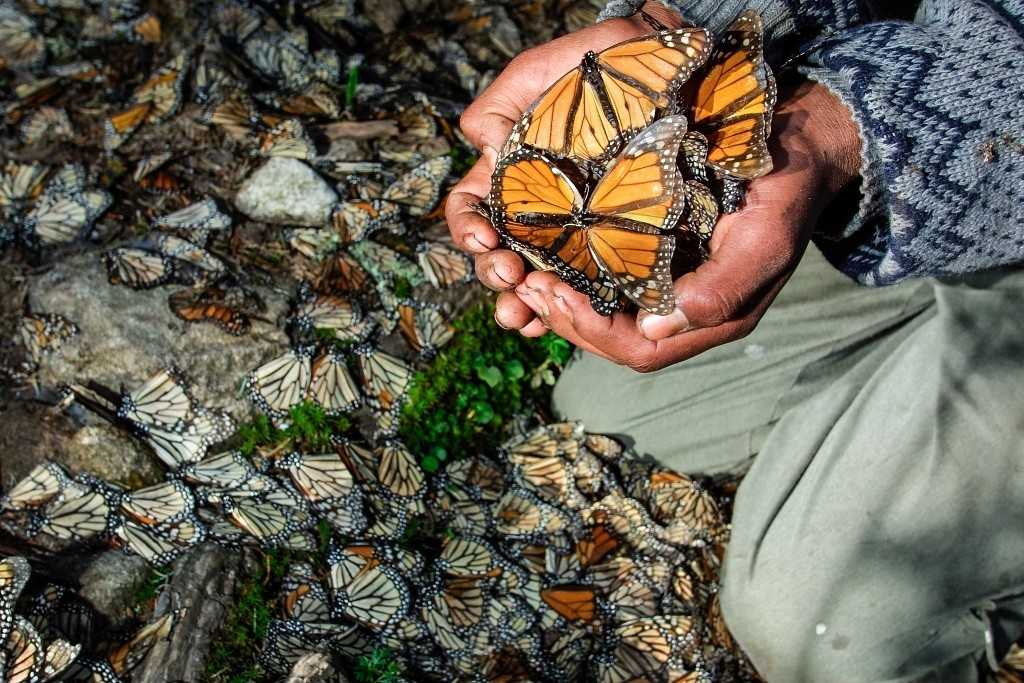 the-mountain-of-butterflies-9 6 Interesting Facts about the Mountain of Butterflies