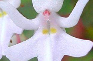 funny flower make you smile
