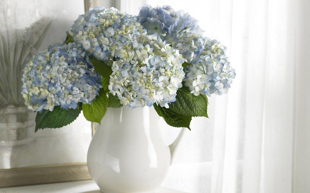 Harden-the-Blooms-9 7 Tricks to Make Flowers Last forever ...
