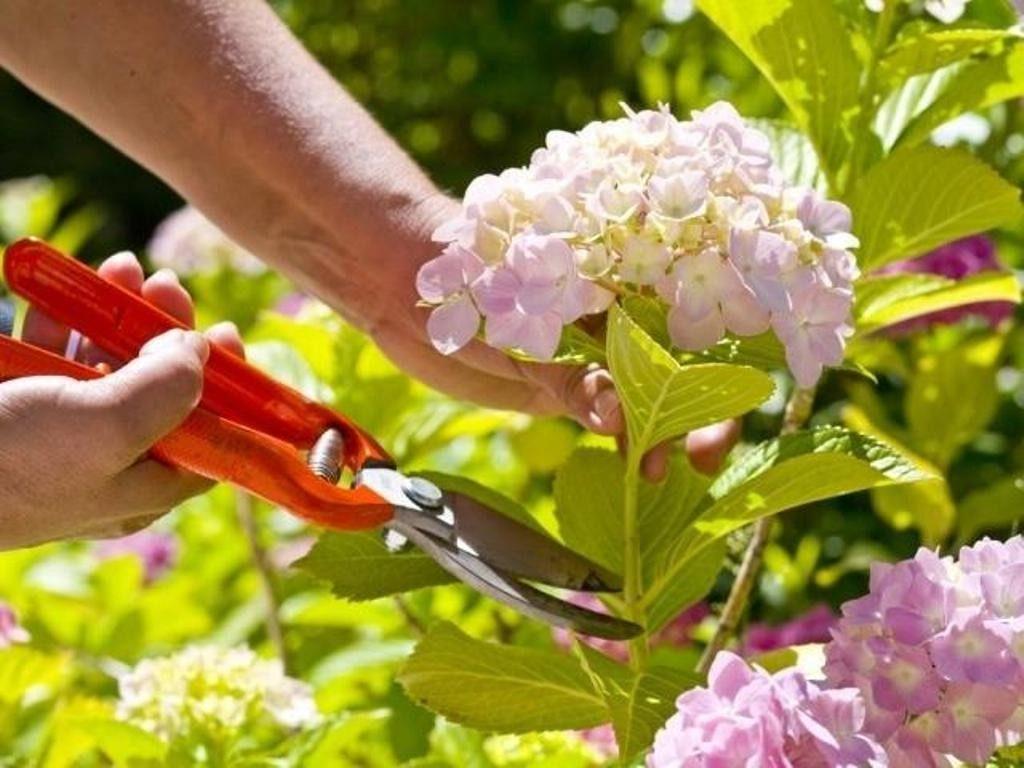 Well-Groomed-flowers-2 7 Tricks to Make Flowers Last forever ...