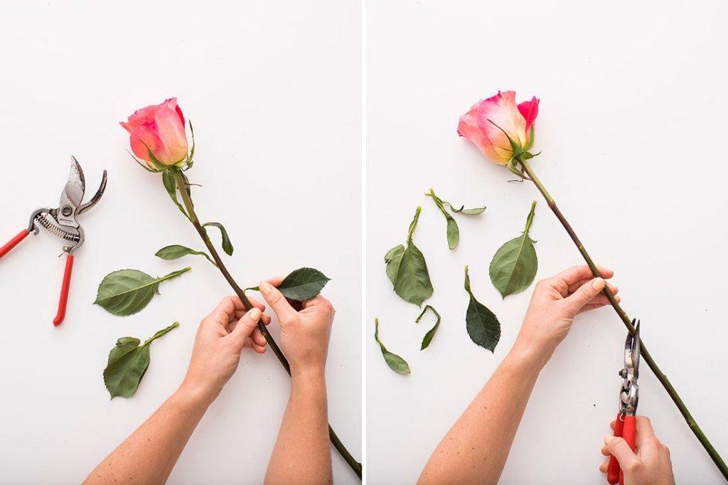Well-Groomed-flowers-4 7 Tricks to Make Flowers Last forever ...