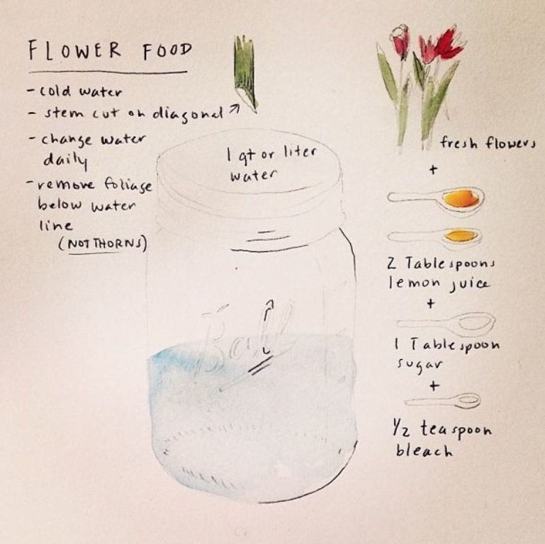 feed-flowers-1 7 Tricks to Make Flowers Last forever ...