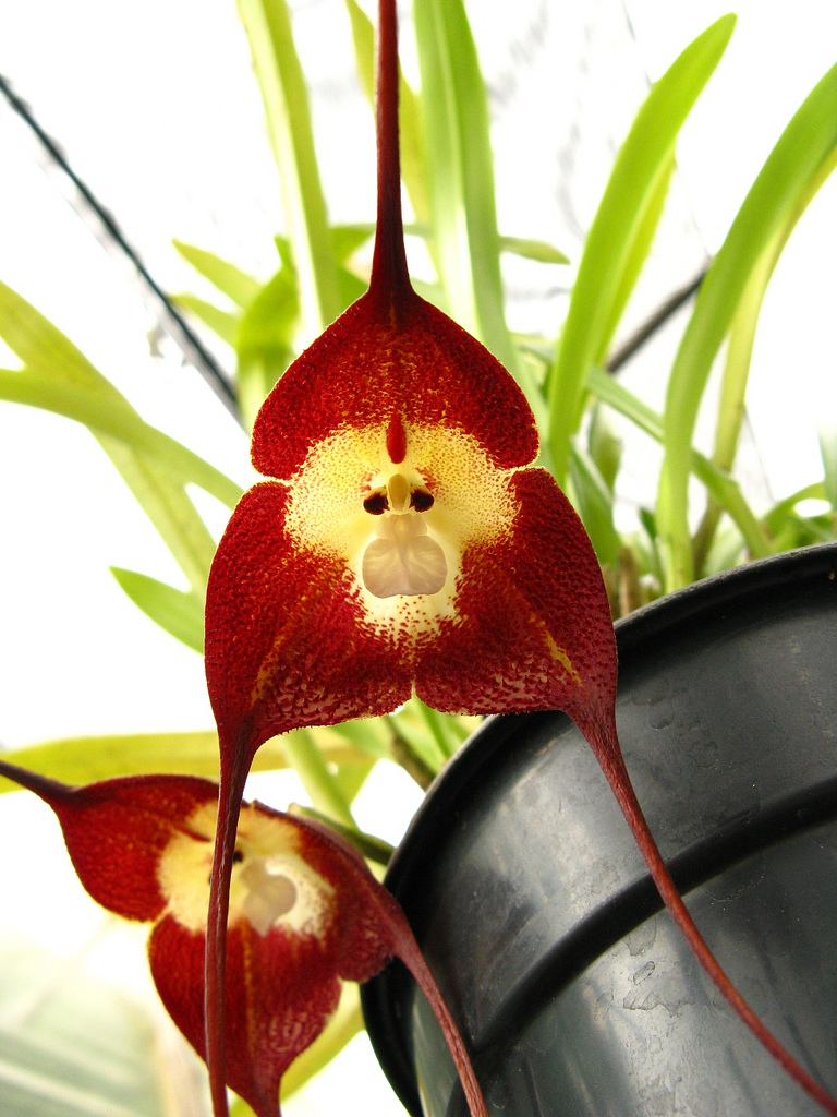 orchm-7 Top 10 Lovely Flowers That Smile All The Year