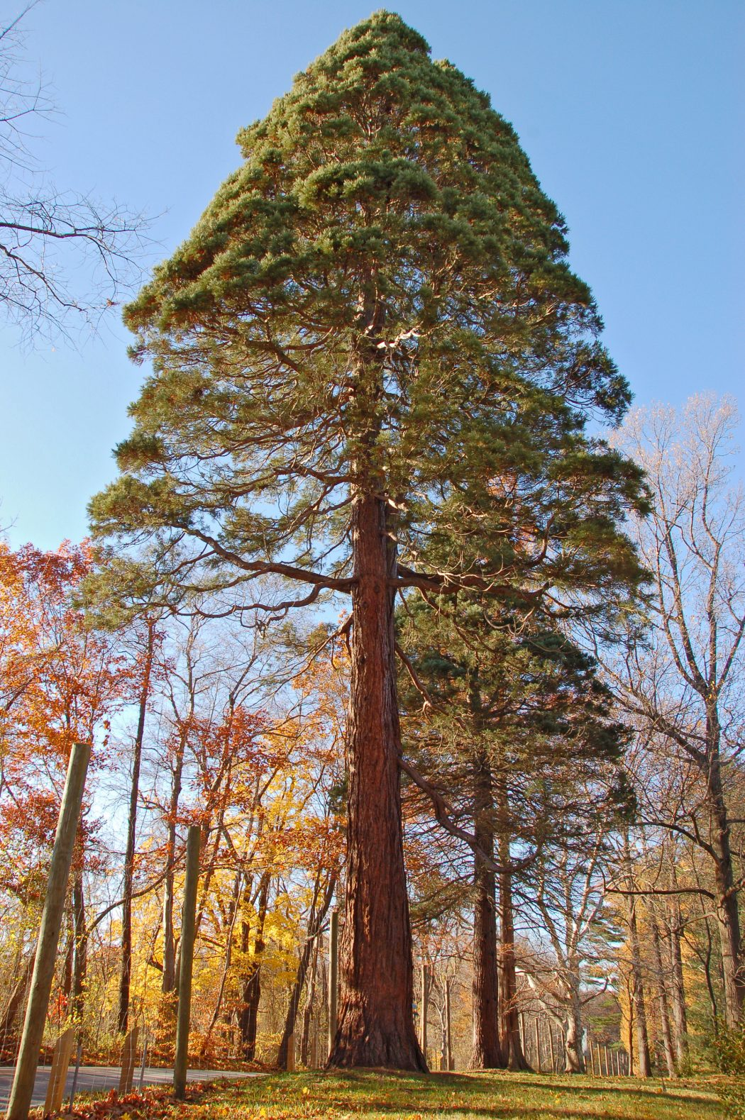 10c Top 10 Fastest Growing Trees in the World
