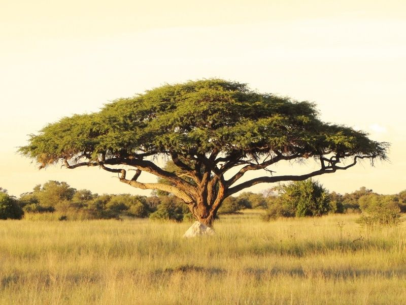 32 Top 10 Fastest Growing Trees in the World