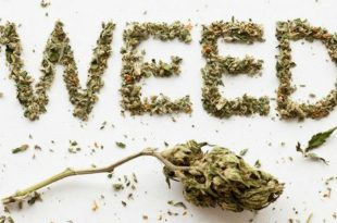 Weed Day