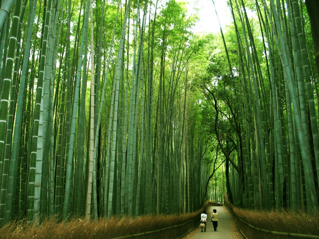bamboo Top 10 Fastest Growing Trees in the World