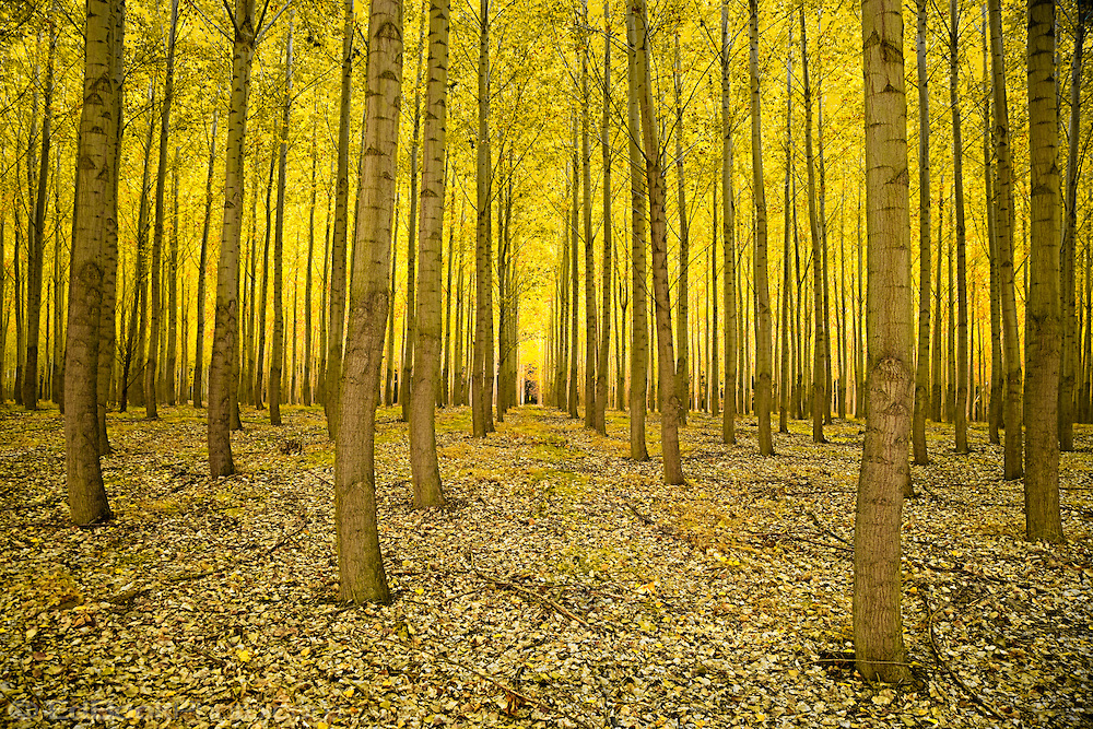 cottonwood-grove-EdBook0414 Top 10 Fastest Growing Trees in the World