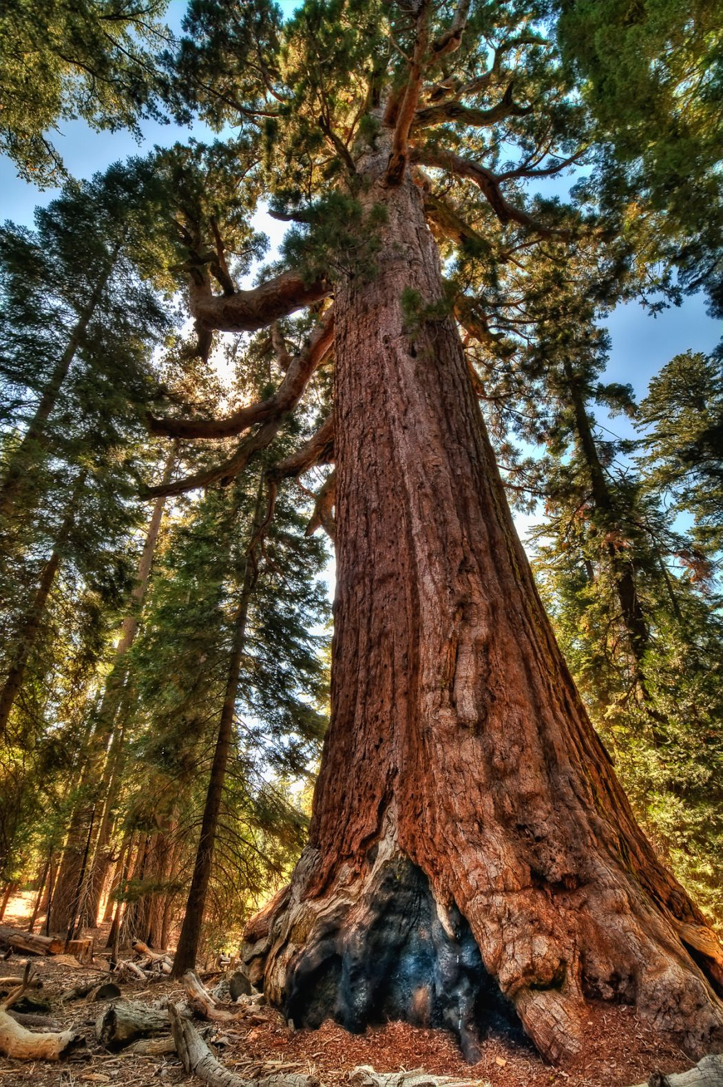 tumblr_mk4sj9SO8N1s8dxkho3_1280 Top 10 Fastest Growing Trees in the World
