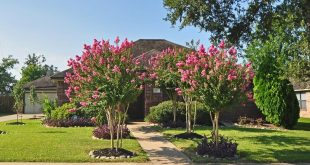 Top 10 Summer-Blooming Trees for Your Garden