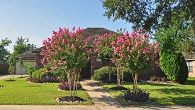 Photo of Top 10 Summer-Blooming Trees for Your Garden