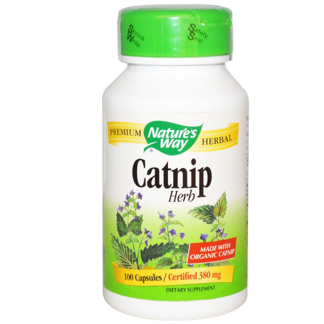 Catnip2 6 Main Healing Products That Are Effective