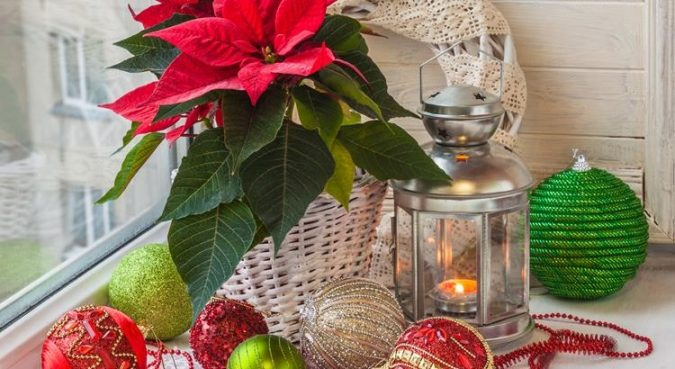 Christmas-indoor-plants-675x369 Top 10 Best Ways To Turn Your Home All Christmassy