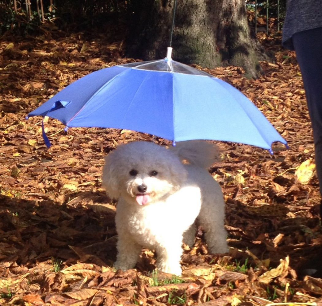 Pets-Umbrella1 15 Unusual Umbrellas Design Trends in 2018