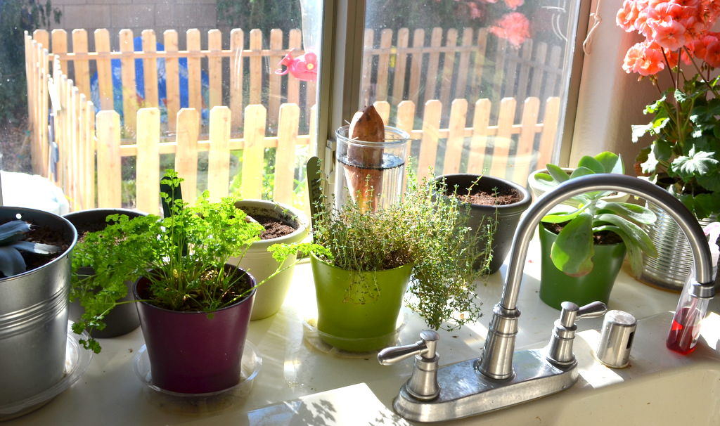 fresh-plants1 5 Latest Kitchens' Decorations Ideas For 2020