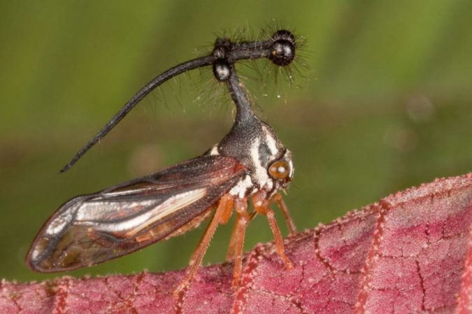 Brazilian-Treehopper-675x449 11 exceptional Insects Realm Creatures