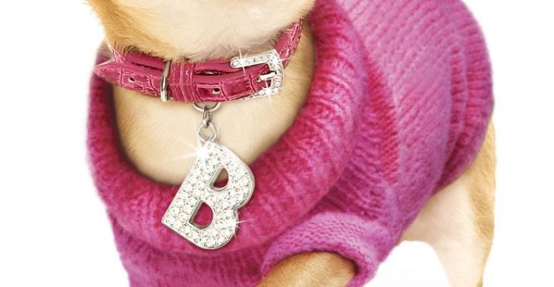 Photo of Dress Your Dog In Jewels