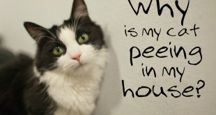 No More Cat Pee Everywhere … READ My PERMANENT Solution STORY to Smelly Cat Urine