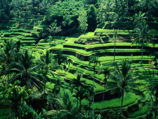 Banaue-Rice-Terraces-Ifugao-2-675x506 Top 10 Most Attractive Places you Should Visit in Philippines