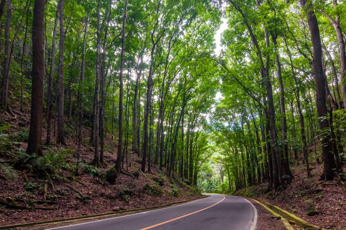 Mahogany-Forest-Bohol-Island-675x448 Top 10 Most Attractive Places you Should Visit in Philippines