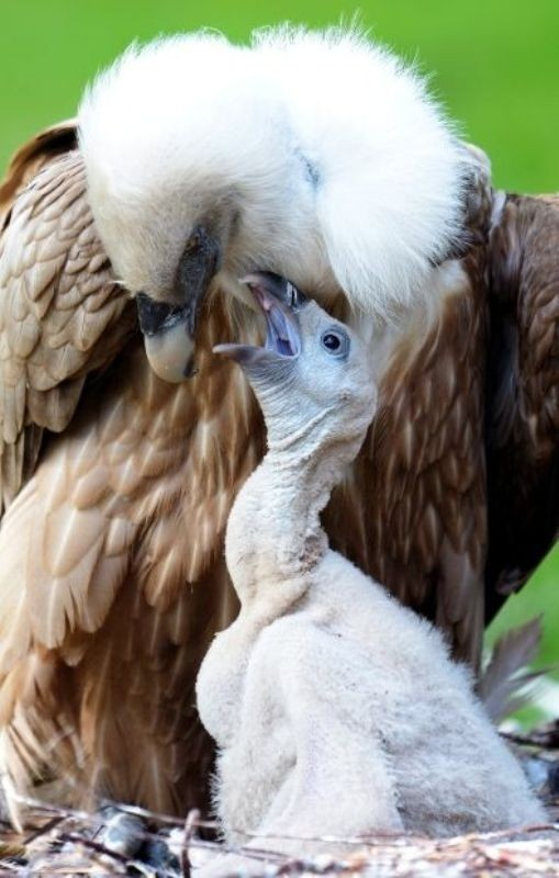 animal-motherhood-1 78+ Heart-touching Photos of Mothers and Their Babies