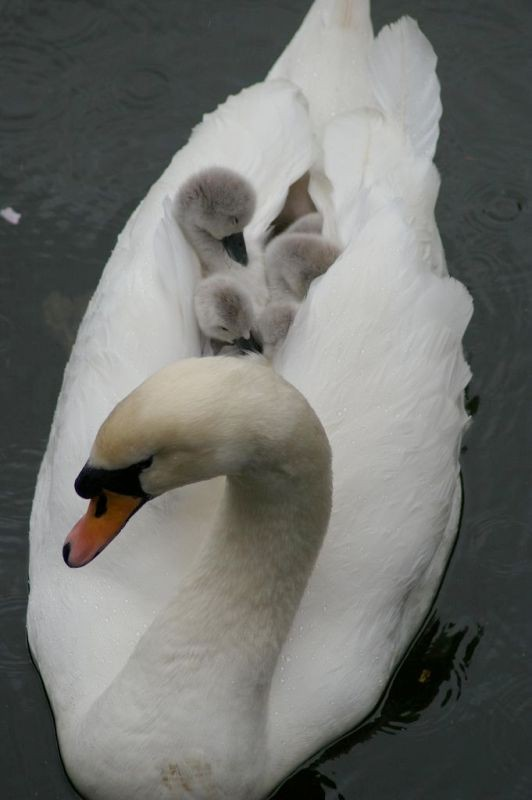 animal-motherhood-10 78+ Heart-touching Photos of Mothers and Their Babies