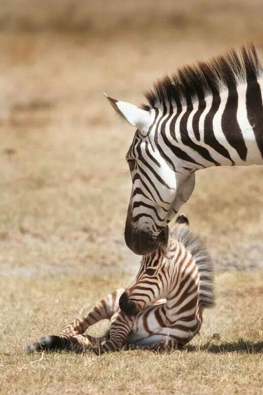 animal-motherhood-11 78+ Heart-touching Photos of Mothers and Their Babies