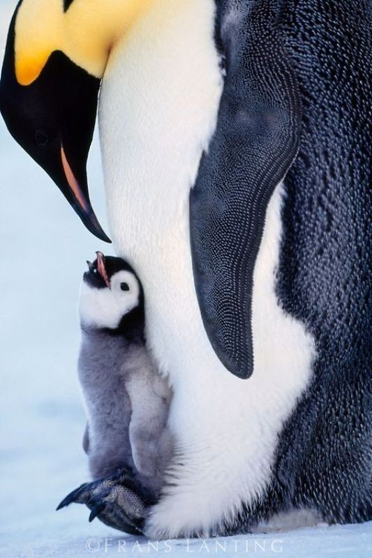 animal-motherhood-12 78+ Heart-touching Photos of Mothers and Their Babies