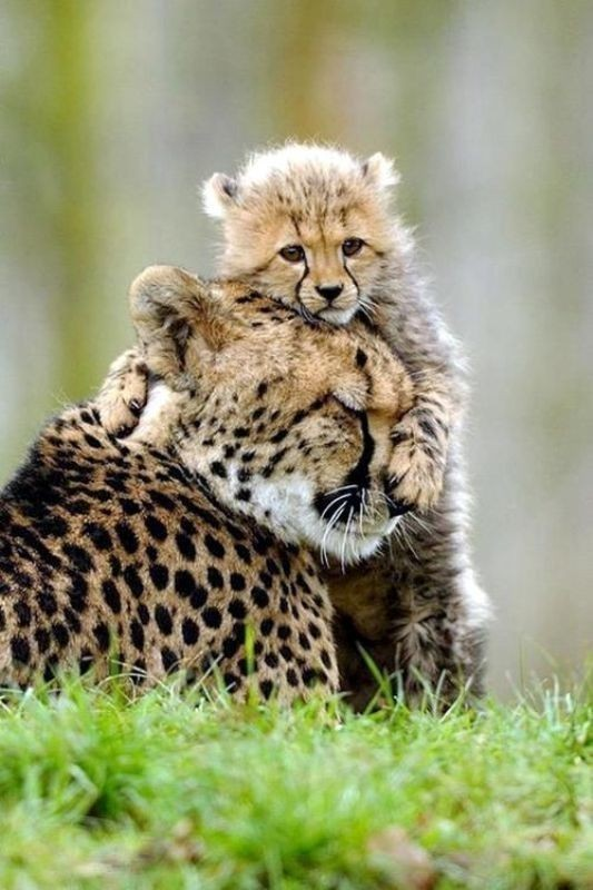 animal-motherhood-13 78+ Heart-touching Photos of Mothers and Their Babies