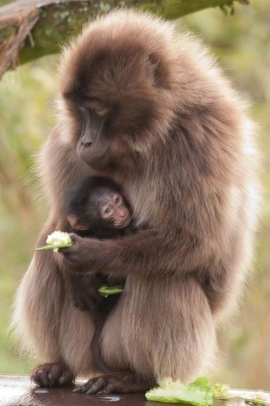 animal-motherhood-15 78+ Heart-touching Photos of Mothers and Their Babies
