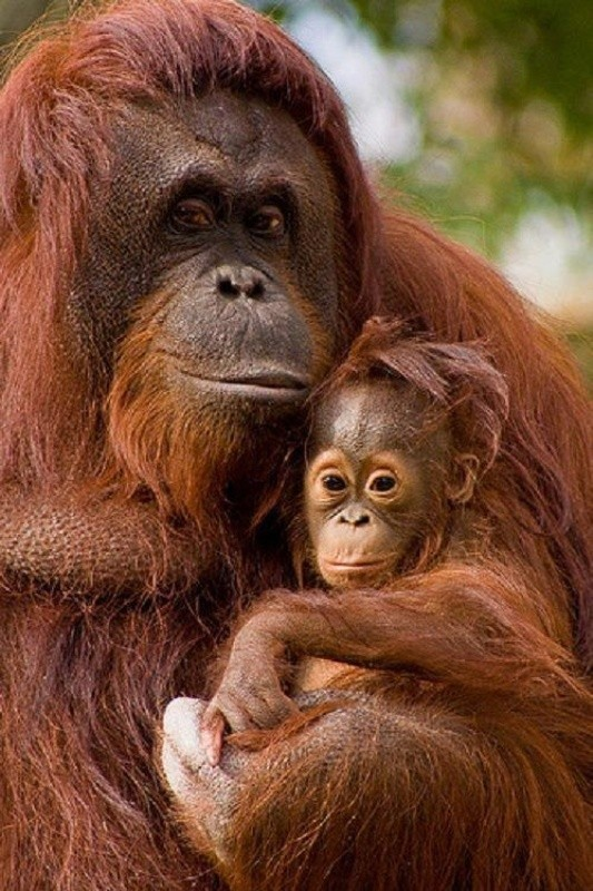 animal-motherhood-16 78+ Heart-touching Photos of Mothers and Their Babies