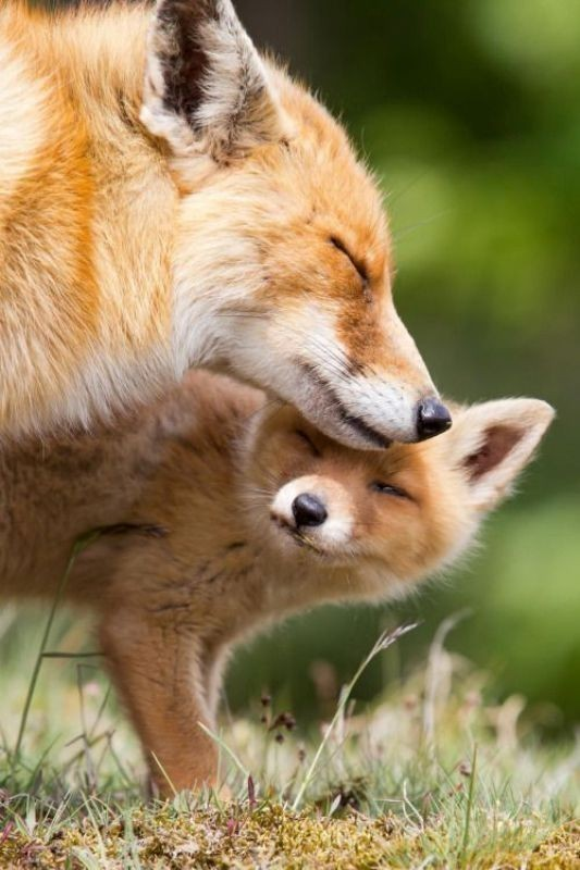 animal-motherhood-17 78+ Heart-touching Photos of Mothers and Their Babies