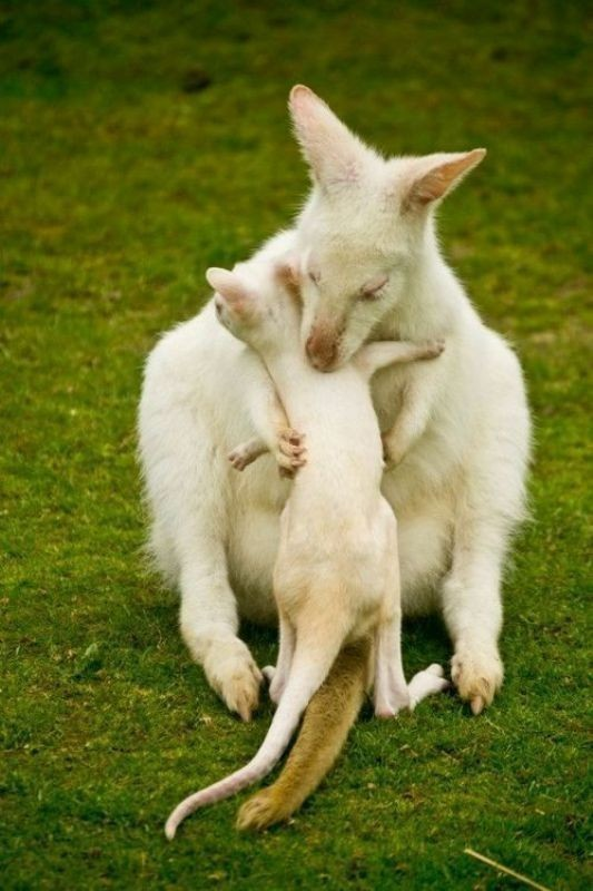 animal-motherhood-18 78+ Heart-touching Photos of Mothers and Their Babies