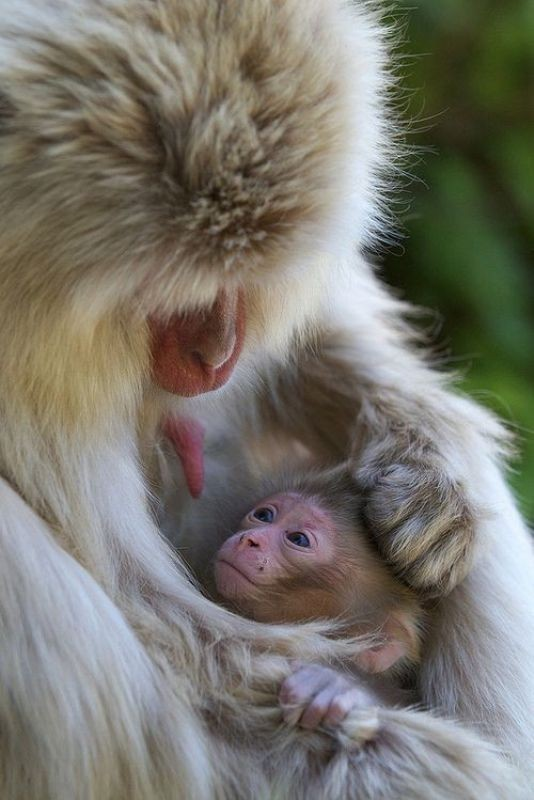 animal-motherhood-19 78+ Heart-touching Photos of Mothers and Their Babies