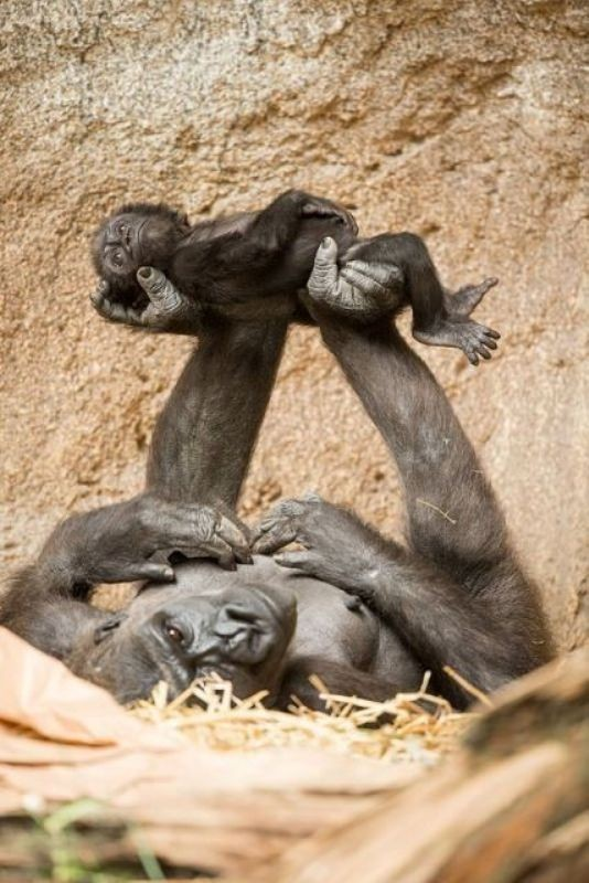 animal-motherhood-20 78+ Heart-touching Photos of Mothers and Their Babies