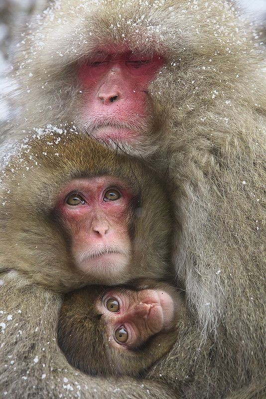 animal-motherhood-21 78+ Heart-touching Photos of Mothers and Their Babies
