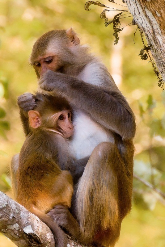 animal-motherhood-22 78+ Heart-touching Photos of Mothers and Their Babies