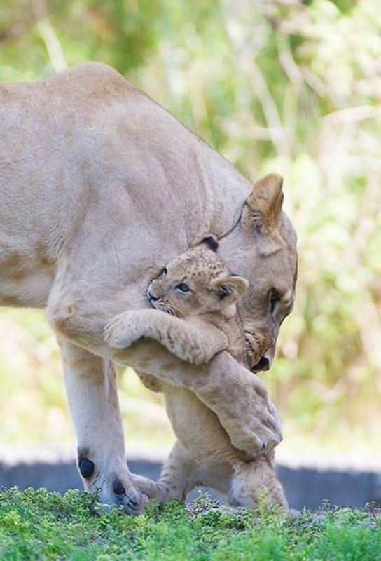 animal-motherhood-23 78+ Heart-touching Photos of Mothers and Their Babies