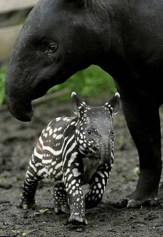 animal-motherhood-25 78+ Heart-touching Photos of Mothers and Their Babies