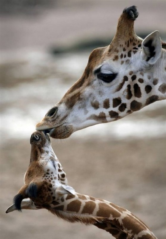 animal-motherhood-26 78+ Heart-touching Photos of Mothers and Their Babies