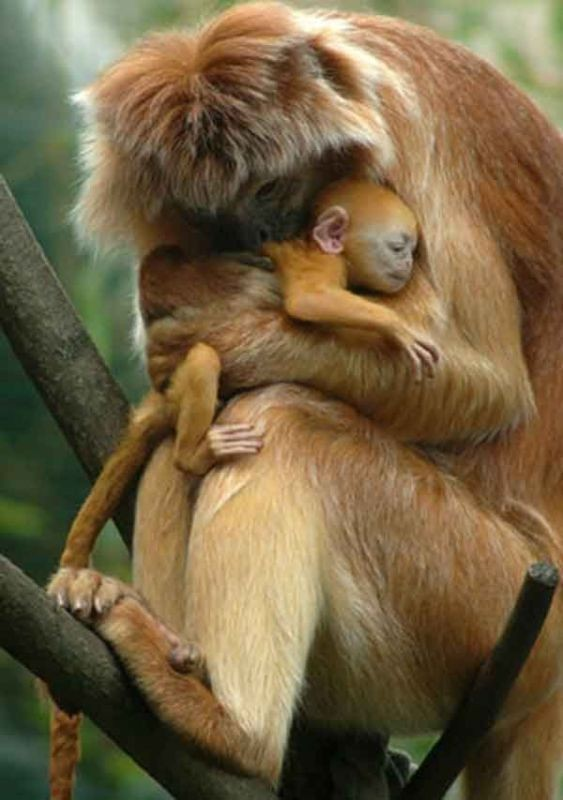 animal-motherhood-27 78+ Heart-touching Photos of Mothers and Their Babies