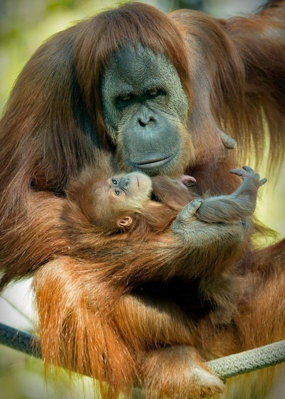 animal-motherhood-28 78+ Heart-touching Photos of Mothers and Their Babies