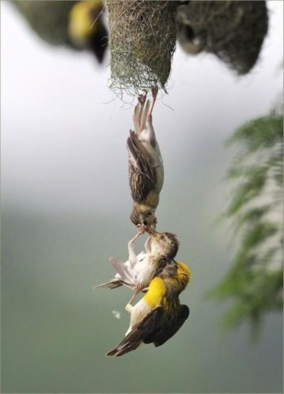 animal-motherhood-29 78+ Heart-touching Photos of Mothers and Their Babies
