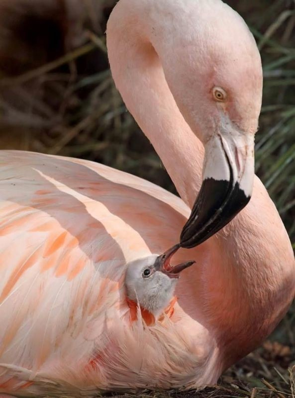 animal-motherhood-30 78+ Heart-touching Photos of Mothers and Their Babies