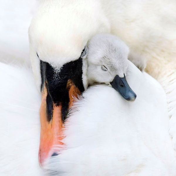 animal-motherhood-32 78+ Heart-touching Photos of Mothers and Their Babies
