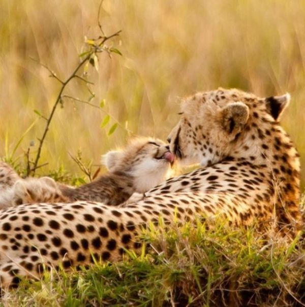 animal-motherhood-33 78+ Heart-touching Photos of Mothers and Their Babies