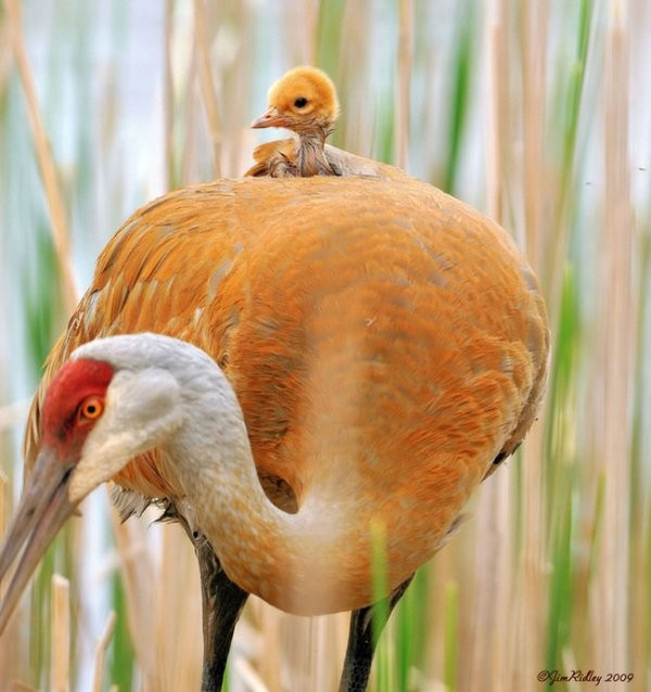 animal-motherhood-34 78+ Heart-touching Photos of Mothers and Their Babies