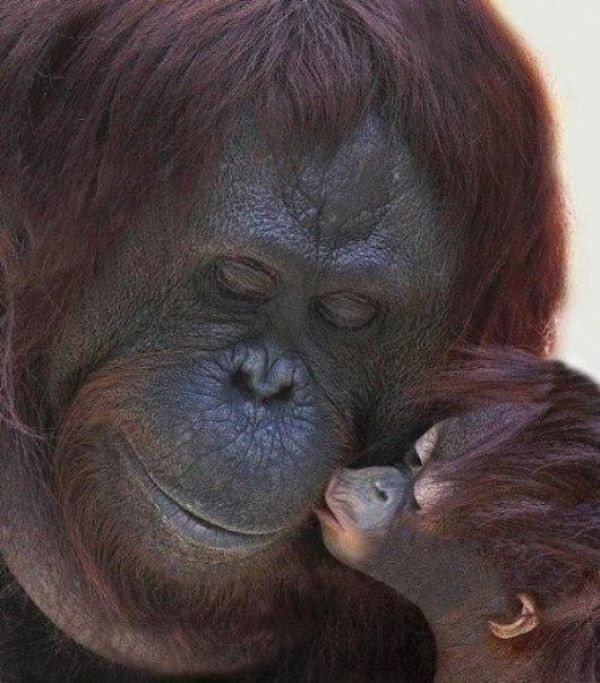 animal-motherhood-35 78+ Heart-touching Photos of Mothers and Their Babies